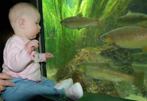Baby looking at Fish in the London Aquarium