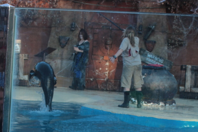 Halloween Sea Lion Show at West Midlands Safari Park